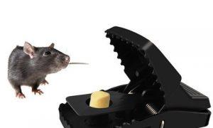 Bộ bẫy chuột 353