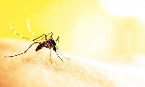 Dịch vụ phun, diệt muỗi toàn quốc giá rẻ