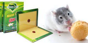 Hộp bẫy keo diệt chuột Rat Trap